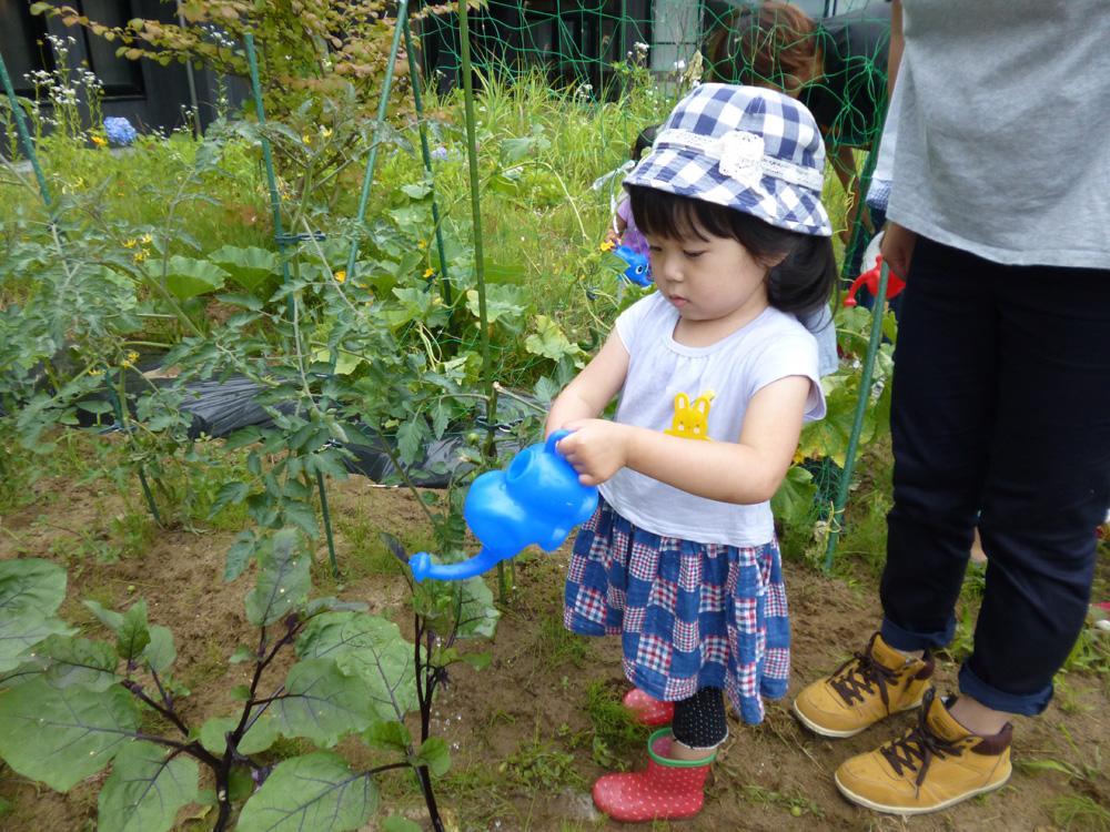 幼児教室「おひさまくらぶ」の様子(畑の水やり)